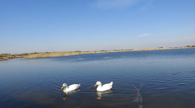 Salvemos la Laguna de Soria, Patrimonio mendocino